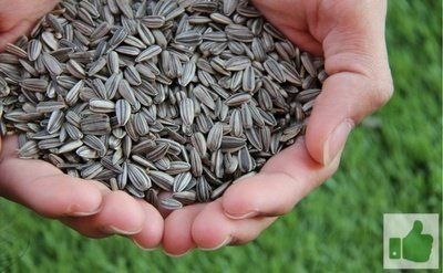Sunflower Seeds - The Best Foods For Getting A Good Night's Sleep
